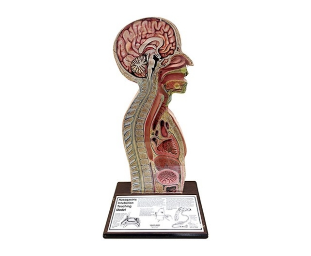 Nasogastric Intubation Teaching Model